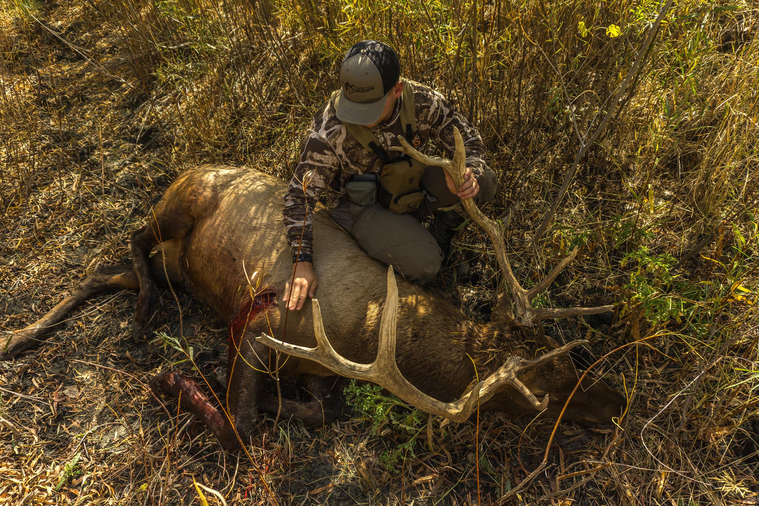 Montana Elk Logan Summers