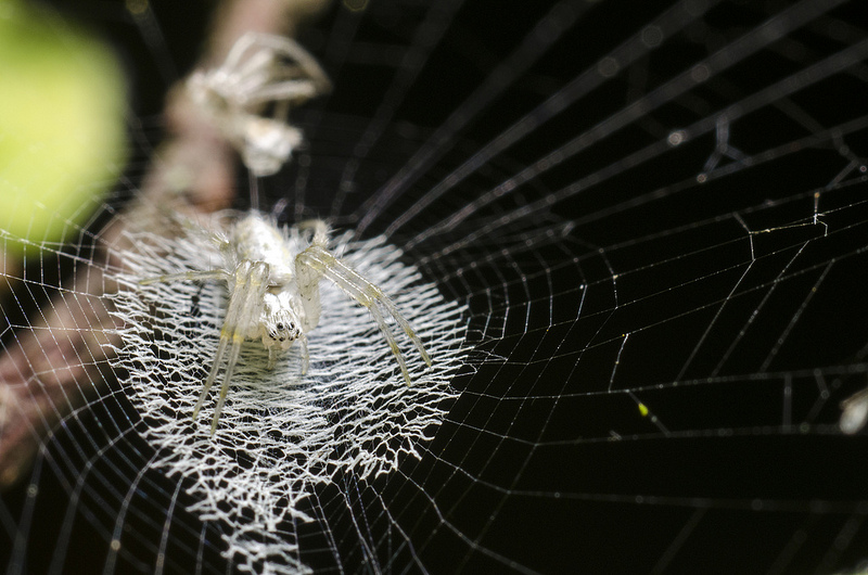 Spider with Intricate Web