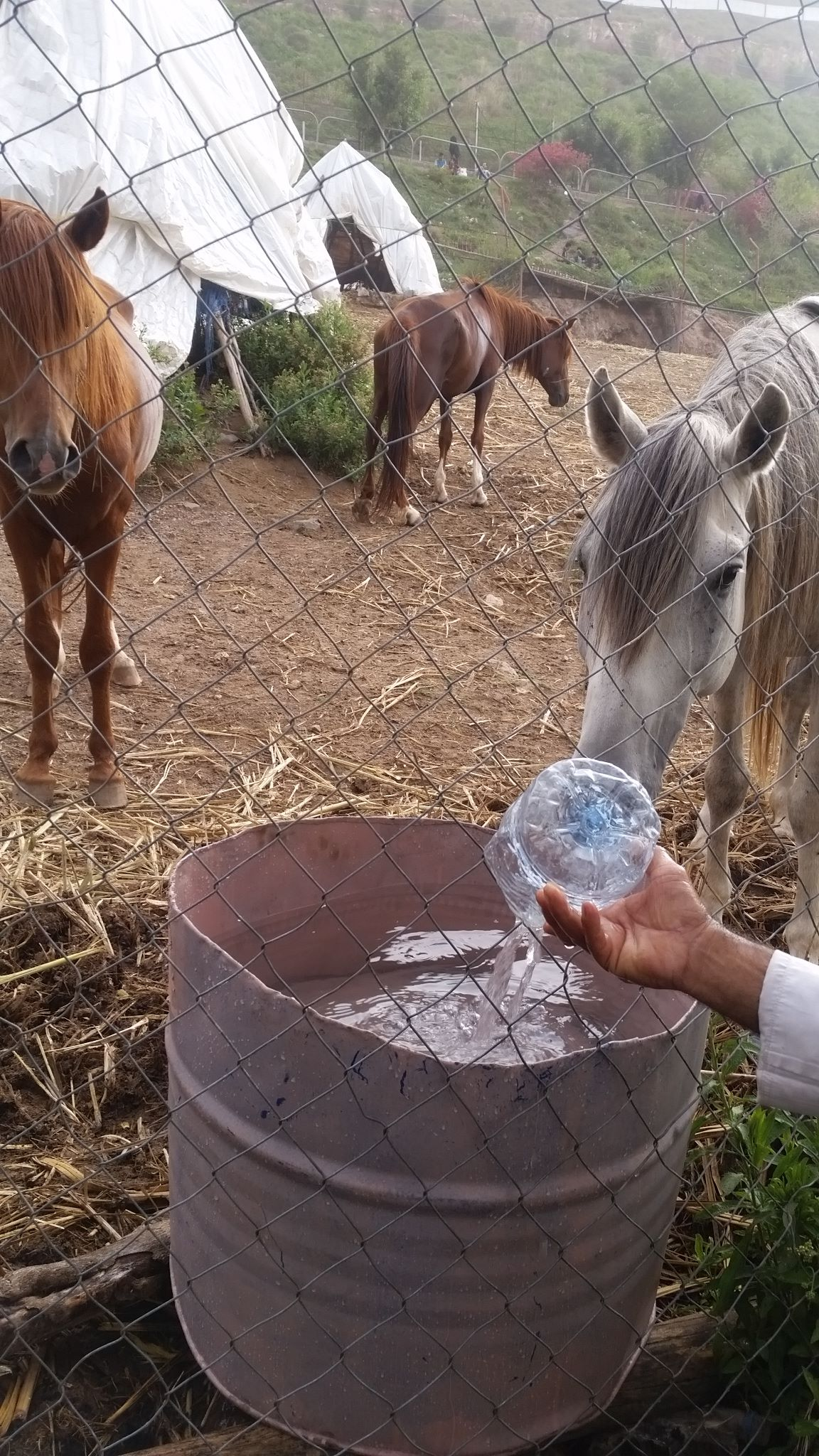 Ibb Zoo 9 July 2017 new water pails and water to drink KMB's rescue .jpg