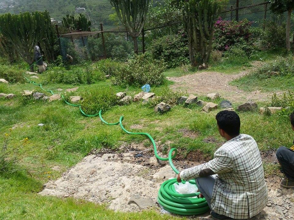 Ibb Zoo 12 July 2017 water hose to the hyenas...Kims Rescue .jpg