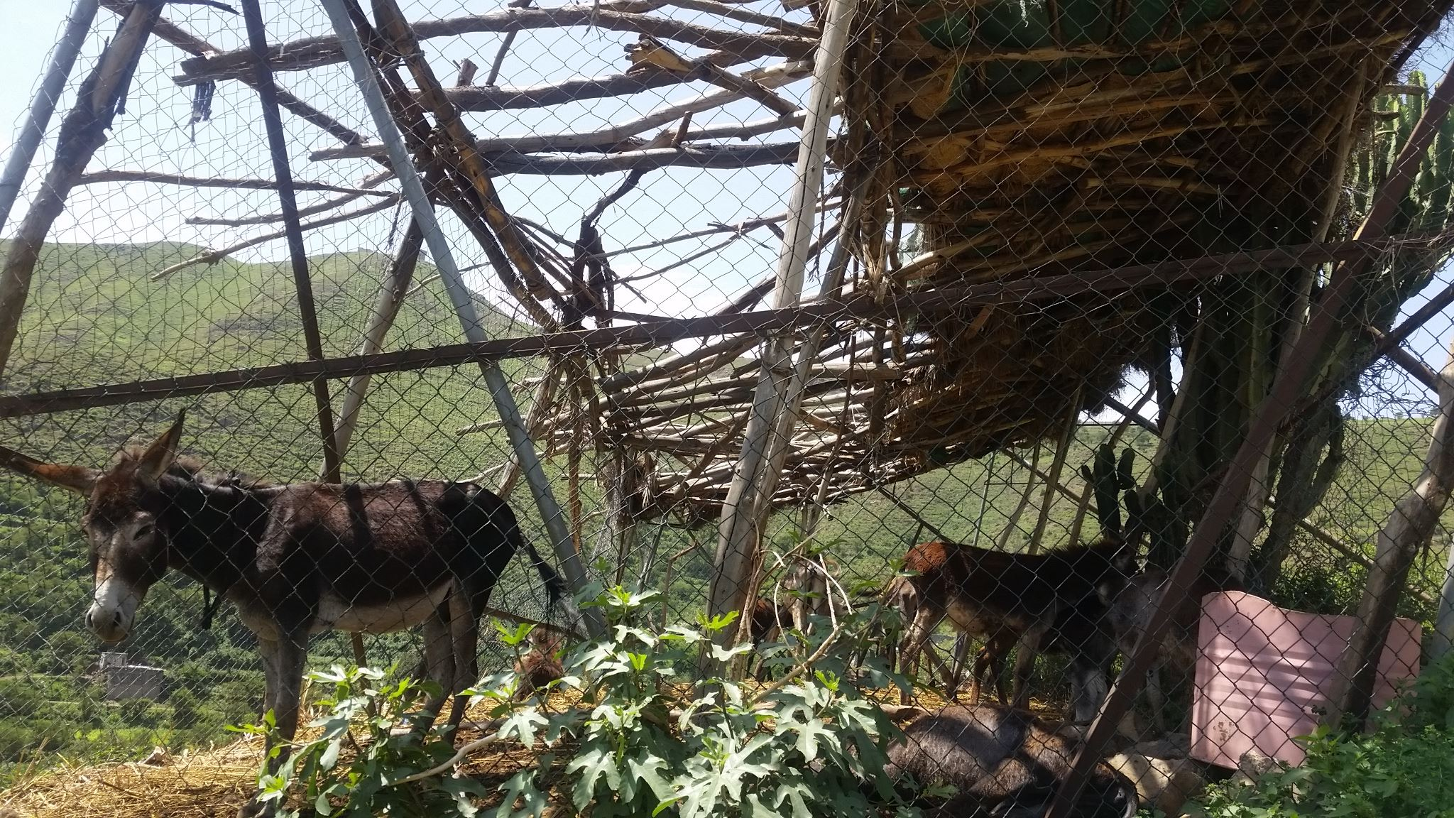 Ibb Zoo baboon wildcat enclosure project.jpg