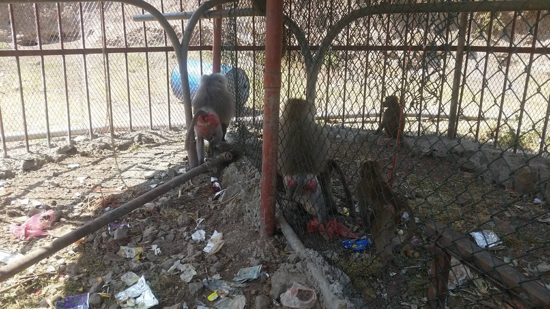Ibb Zoo OWAPAR 22 october 2017 end of those sauna crates Yemen rescue.jpg