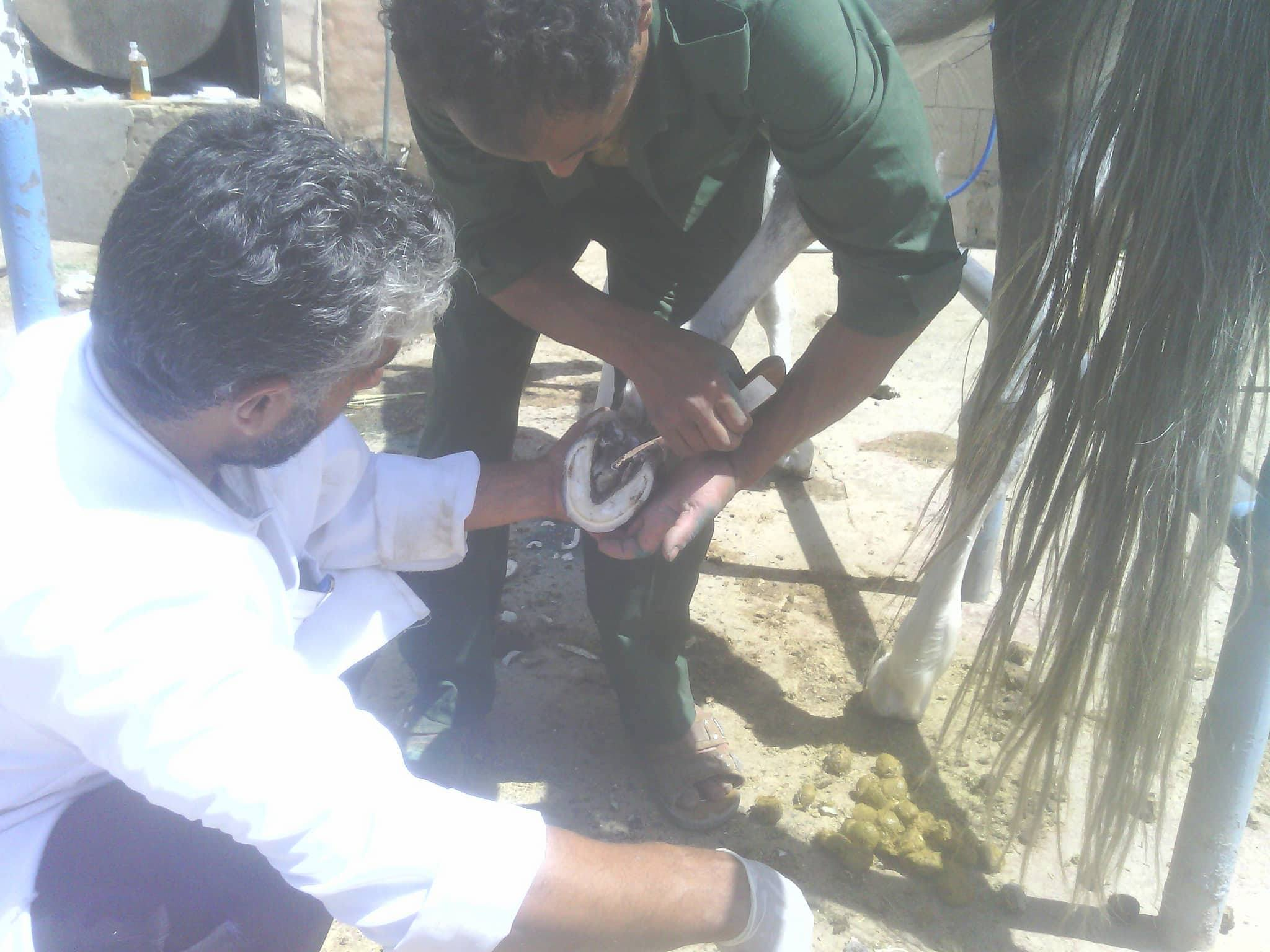 arabian withmohammed  tawvil and dr Moshir scraping away the bacteria 17 oct 2017 OWAP AR The Police Ac.Yemen.jpg