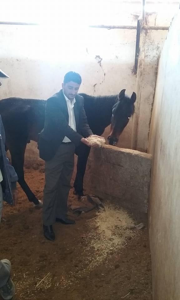 dhamar yemen horses starved to death.jpg