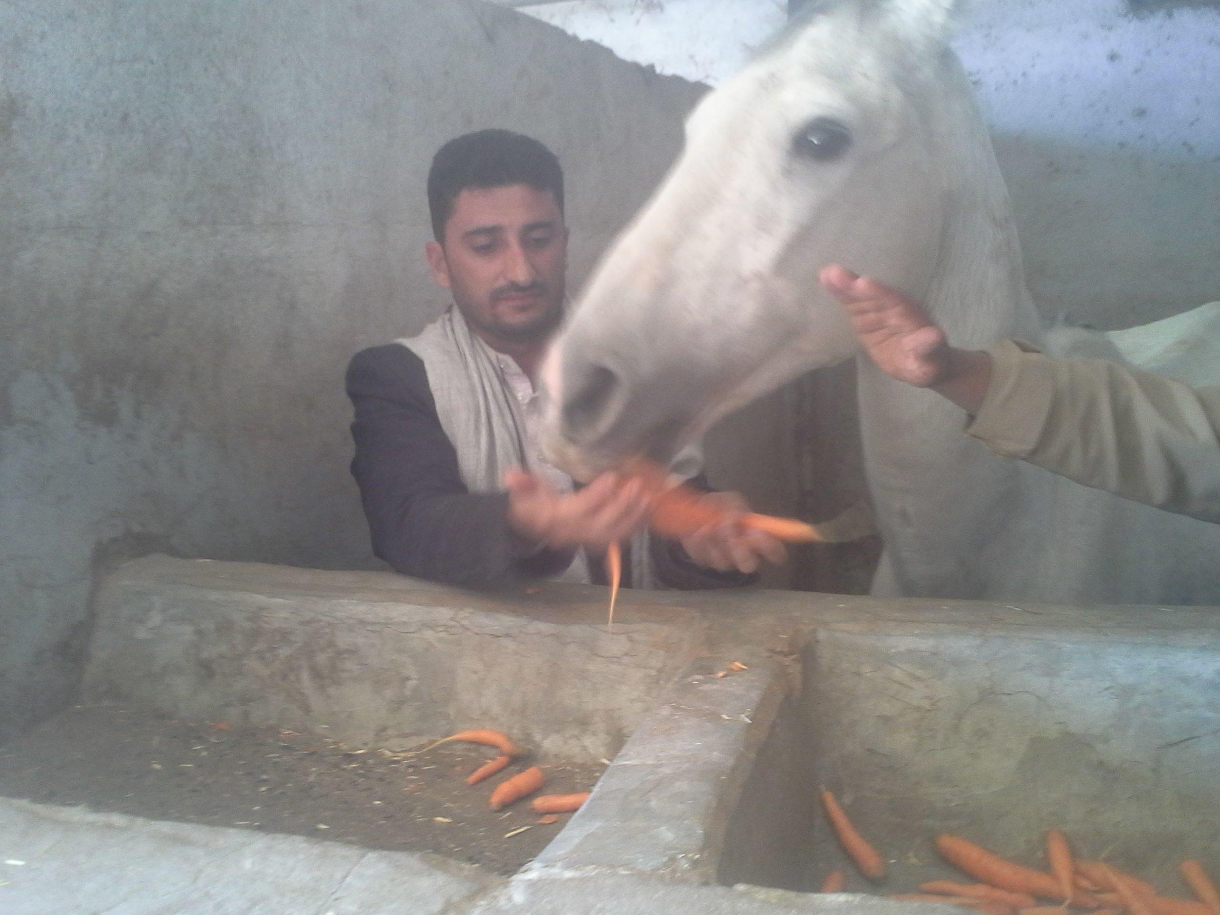 dhamar 2017 arabian horse rescue 18 dec 2017 OWAP AR.jpg