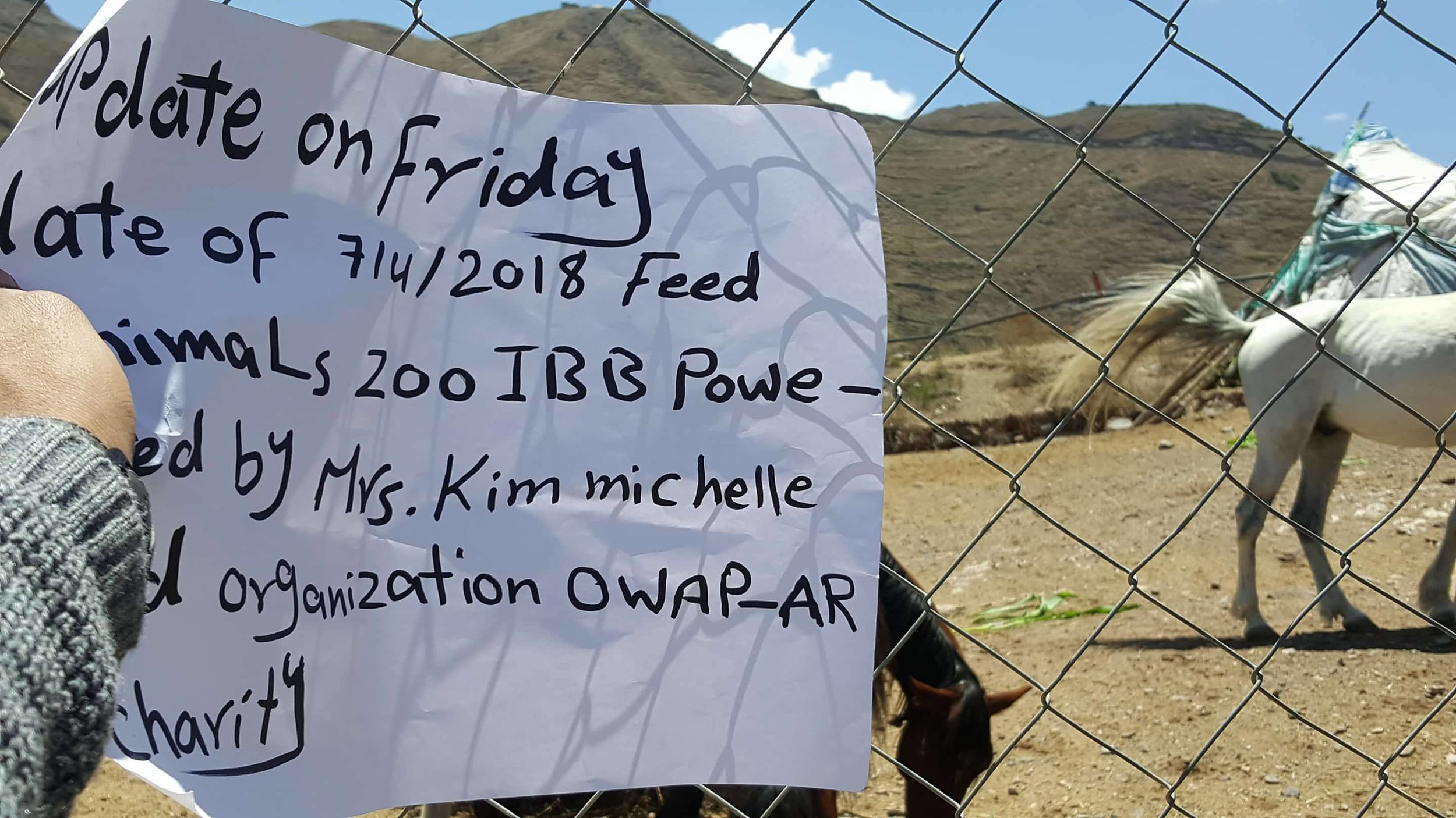 IBB ZOO YEMEN RESCUE MISSION 7 APRIL 2018 TODAY DELIVERY OF HERBIVORE SUPPLIES FOOD AND VEG AND BANANAS by OWAP AR  with our sign horses eating.jpg