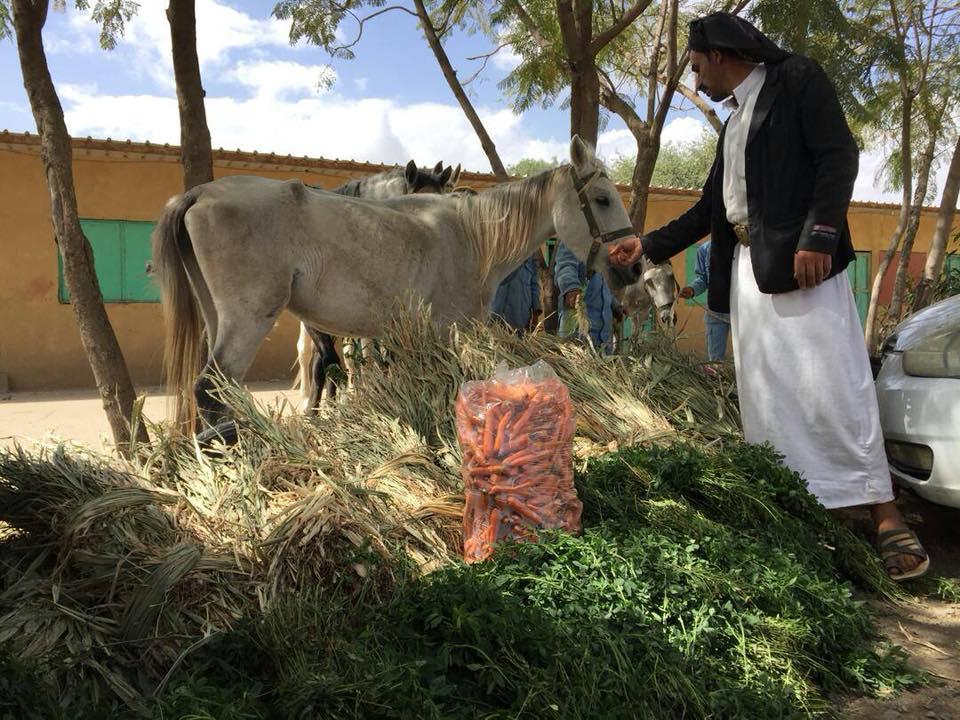 riding school 16 OCT 2018 by Nada Sana'a yemen.jpg