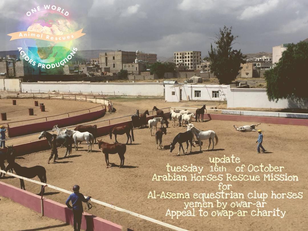 riding 16 OCT 2018 OWAP AR by Nada Sana'a horses rescue yemen.jpg