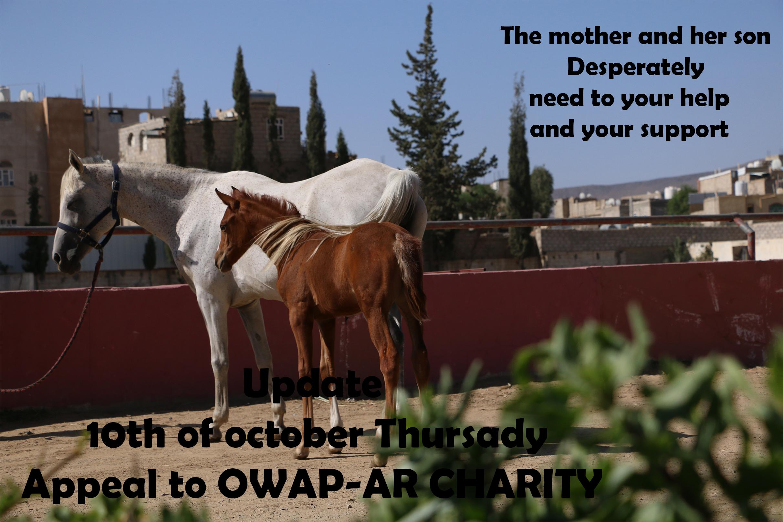 riding club appeal sana'a yemen by nada 10 OCT 2018  OWAP AR.jpg