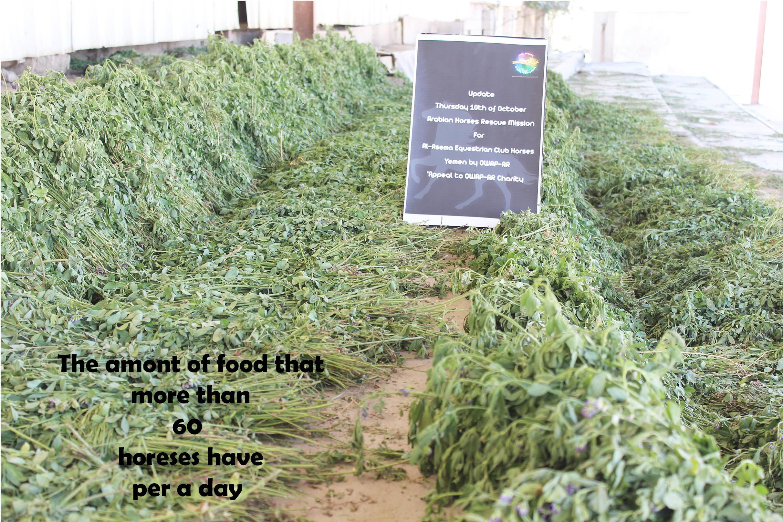 riding cub sana'a yemen food for 60 + horses per day OWAPAR 10 OCT 2018 by Nada.jpg