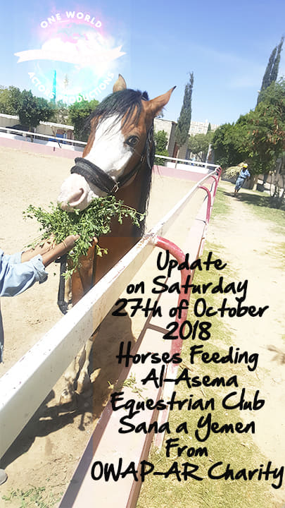 riding club equestrian 27 OCT 2018 OWAP-AR providing . nada onsite feeding a horse from our delivery of fodder Sana'a yemen.jpg