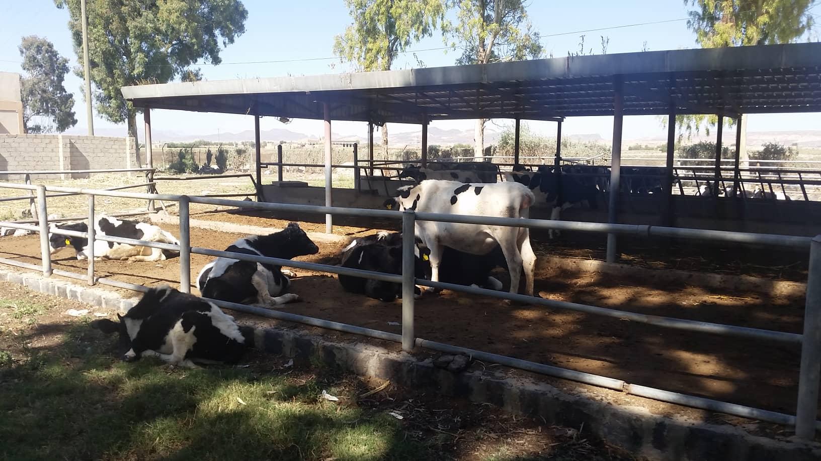 dhamar 3 nov 2018 assessment visit by hisham for OWAP AR ROSABAH FARM RESCUE YEMEN.jpg
