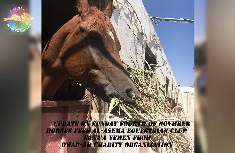 ridin distributin g OWAP AR fodder purchase today 4 NOV 2018 sana'a yemen rescue.jpg