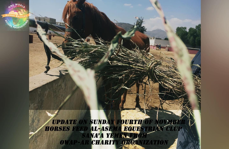 ridinbg OWAP AR Charity provider of green persim 4 NOV 2018 pic by Nada coordinating sana' a yemen.jpg