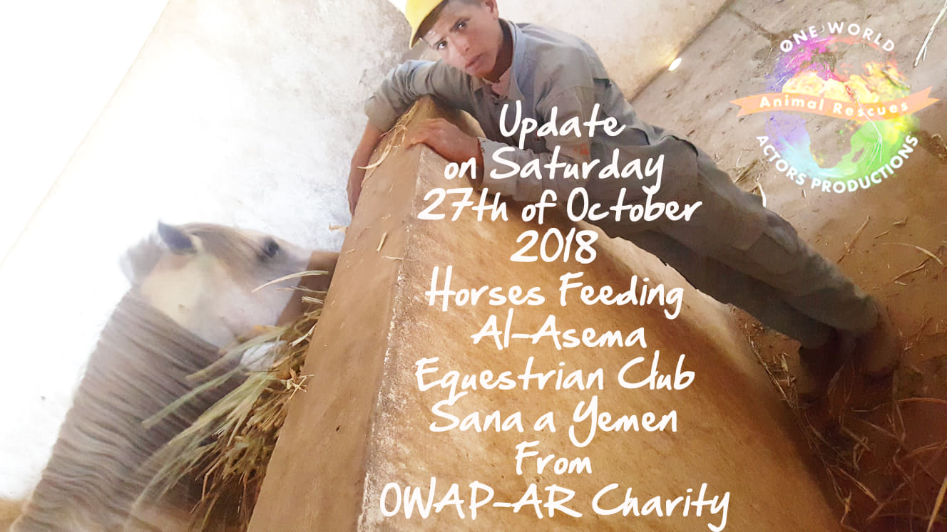 riding club feeding our delivery today 27 OCT 2018 Sana'a yemen by OWAP AR Nada pic  boy 1 of 14 working.jpg