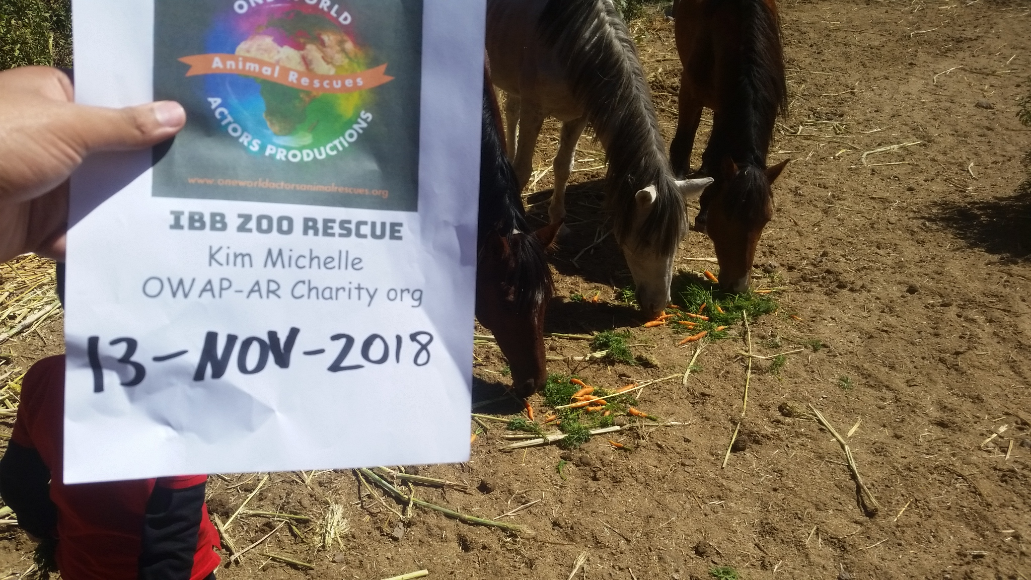 ibb zoo carrots for the horses poor mites hisham pic OWAP -AR Charity providing 13 NOV 2018.jpg