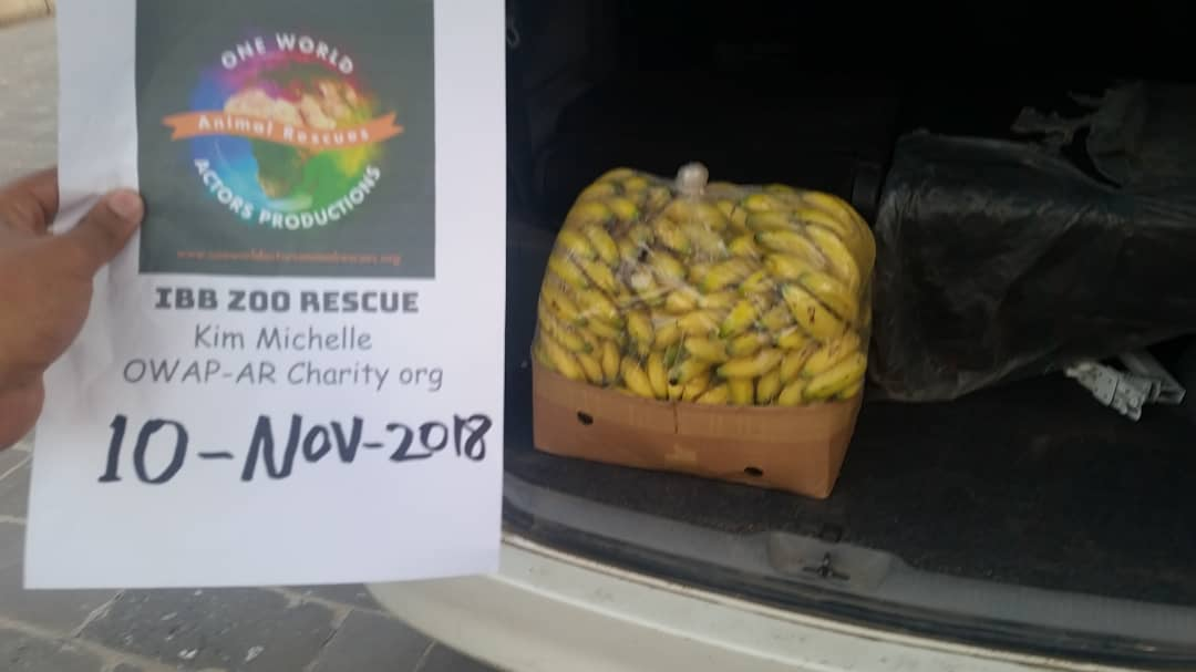 ibb zoo bananas in car delivery by OWAP-AR 10 NOV 2018 hisham filming and coordi nating.jpg