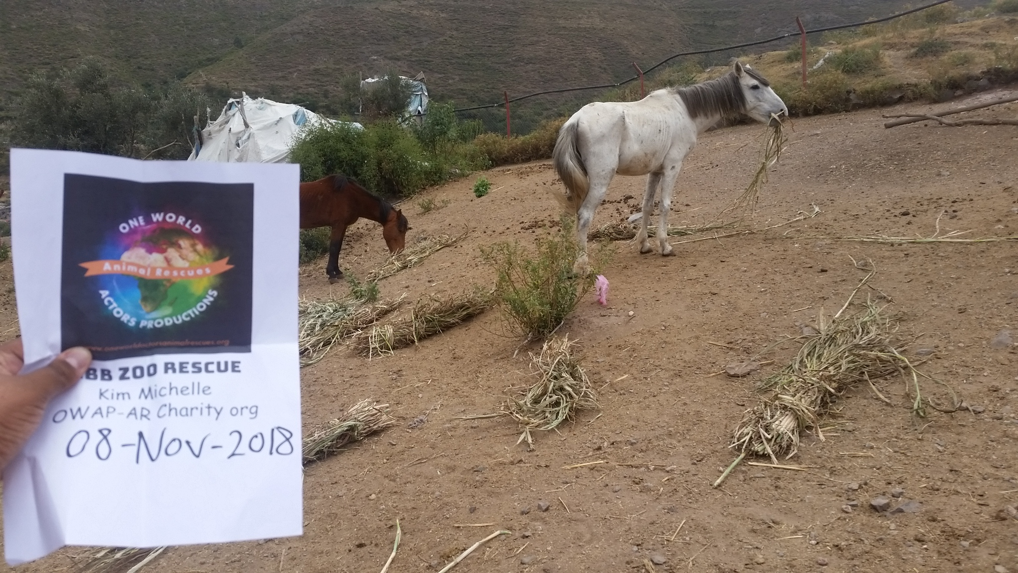 ibb zoo horses eating OWAP AR delivery 8 NOV 2018 our sign Hisham pic and work.jpg
