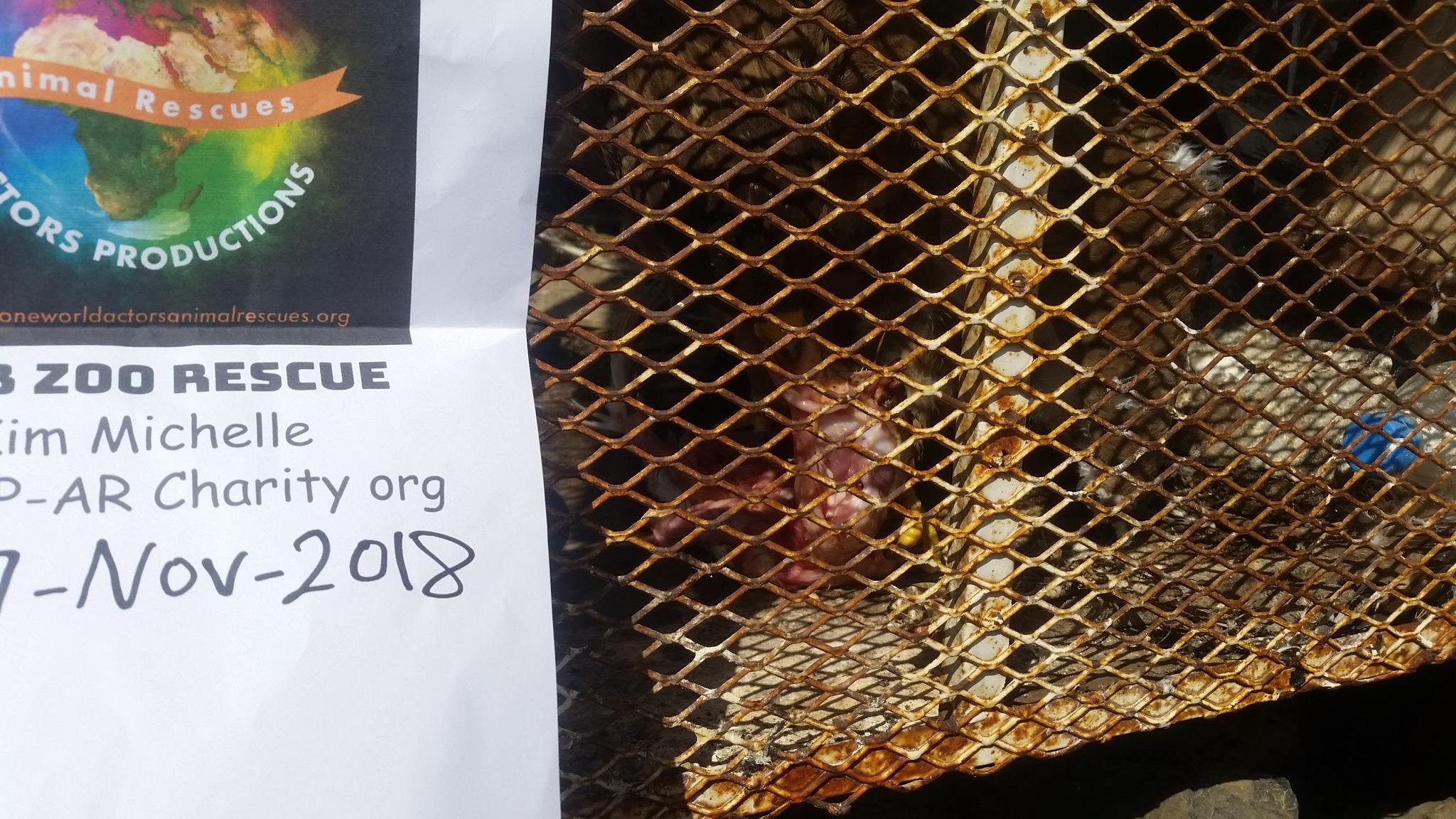 ibb zoo eagle eating OWAP AR delivery chickens 2 Nov 7 sign 2018 Hisham pic yemen.jpg
