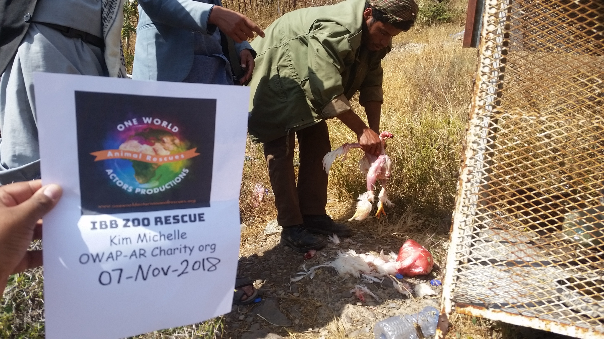 ibb zoo preapruing chicken for eagle Yemen rescue by OWAP-AR with our sign by Hisham.jpg