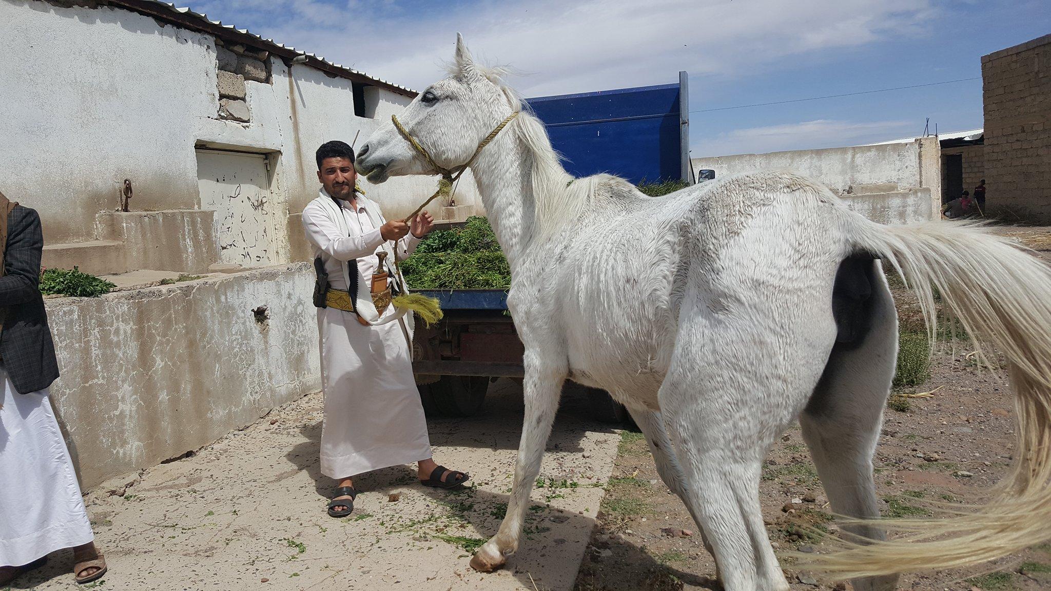 dhamar horse with helall heart breaking OWAP-AR providing fodder today 16 nov 2018.jpg