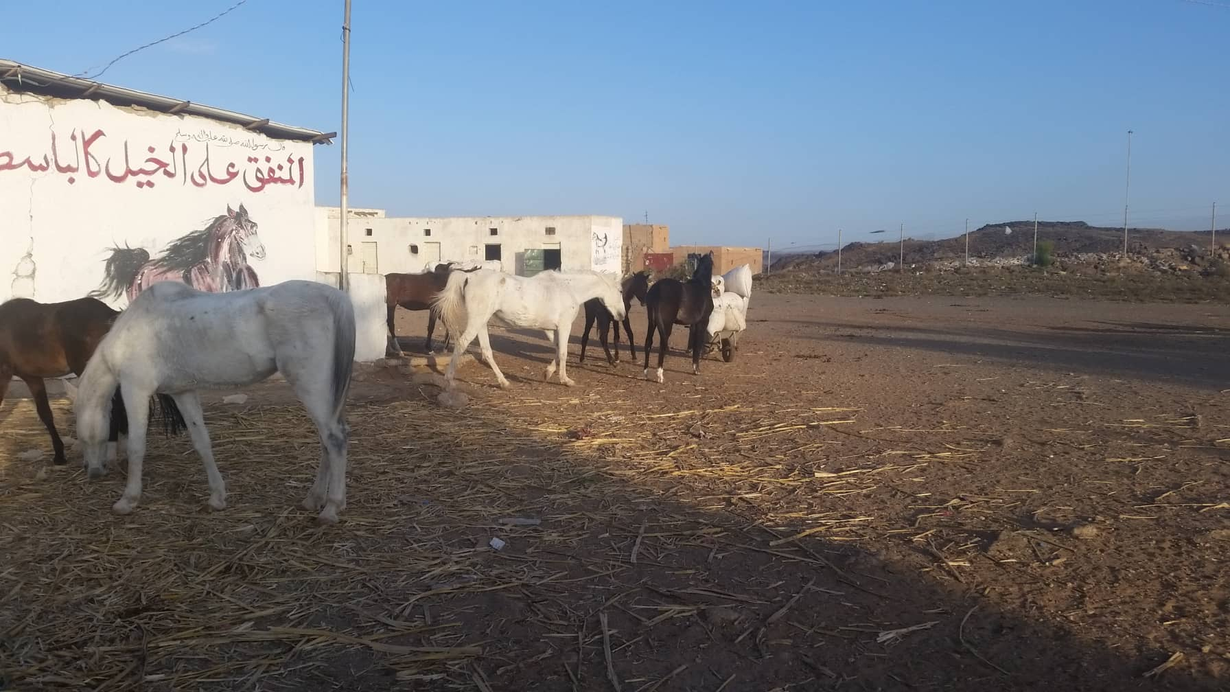 QRAB Horse rescue new delivery by OWAP-AR 16 DEC 2018.jpg