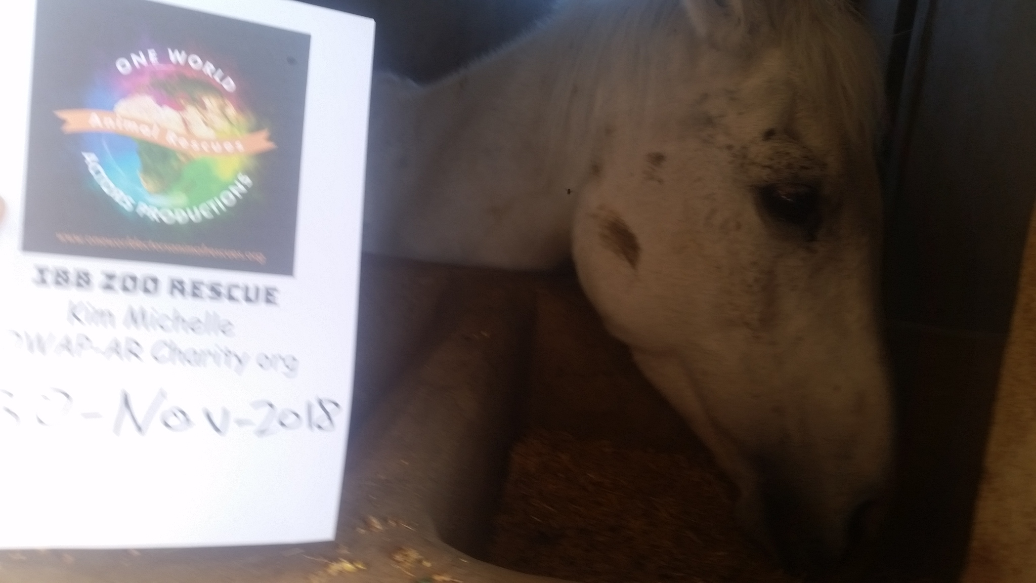 qrab 30 NOV 2018 OWAP-AR horse rescue eating right date wrong sign name.jpg