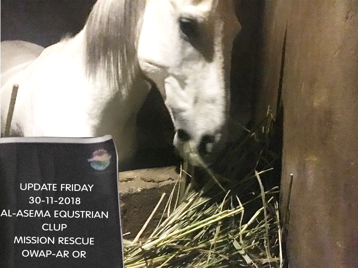 riding club equestrian sana'a yemen 30 NOV 2018 bring them to the light with today's delivery of food Nada coordinating.jpg