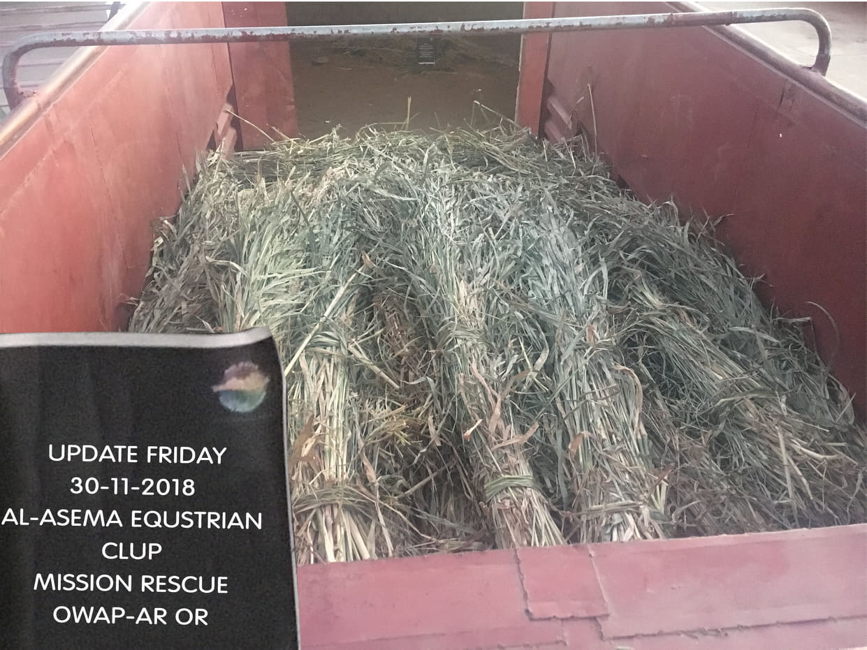 riding truckload fodder 30 NOV 2018 from OWAP-AR Charity nada delivering sana'a yemen horses rescue.jpg