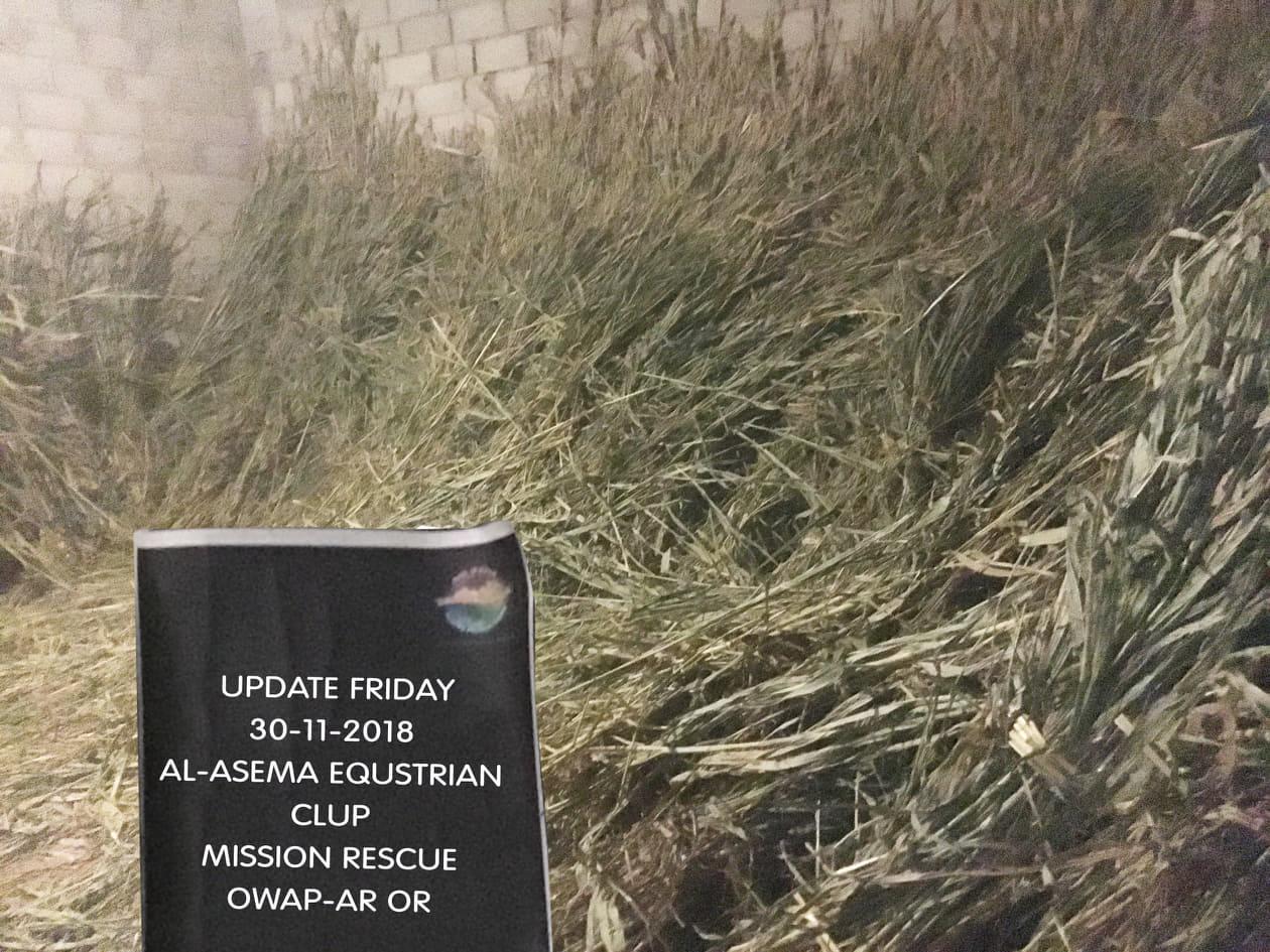 riding 30 NOV 2018 delivery fodder by OWAP-AR sana'a horses rescue yemen sign nada.jpg