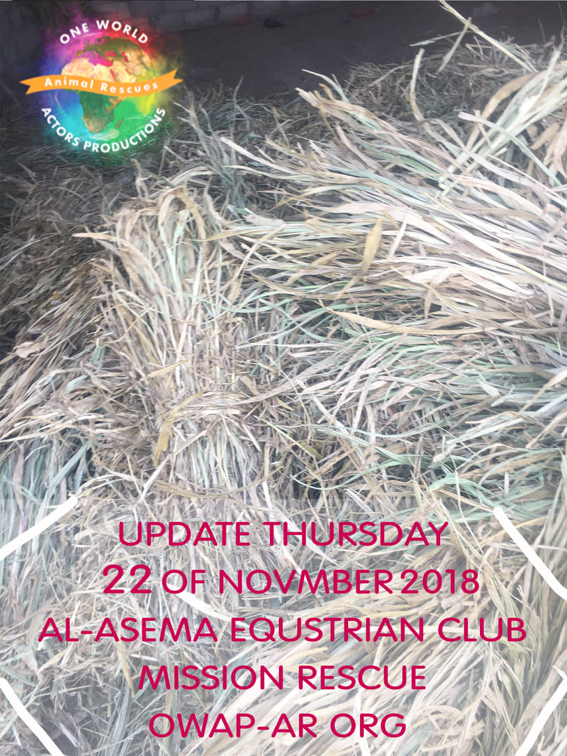 riding equestrian club sana'a yemen horse rescue by OWAP AR update delivery and distribution 22 NOV 2018 nada coordinating.jpg
