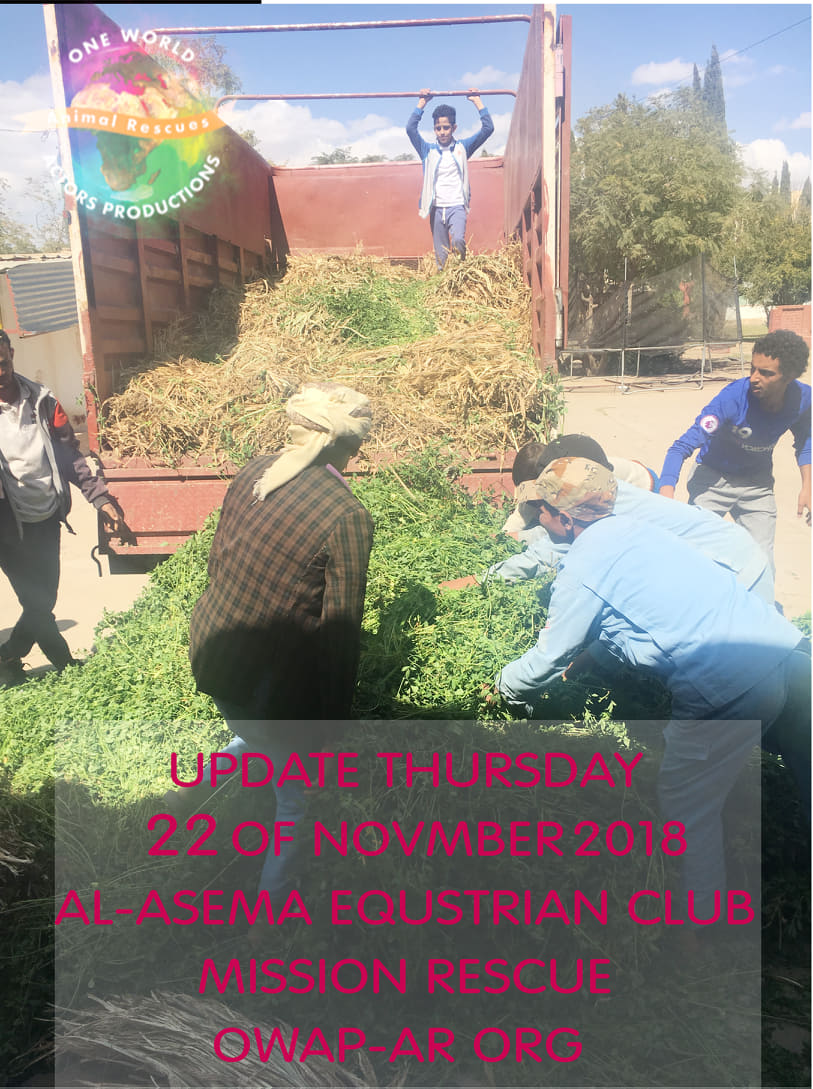 riding club sana'a yemen OWAPAR delivery fodder 22 NOV 2018 unloading lorry rescue horses nada pic.jpg