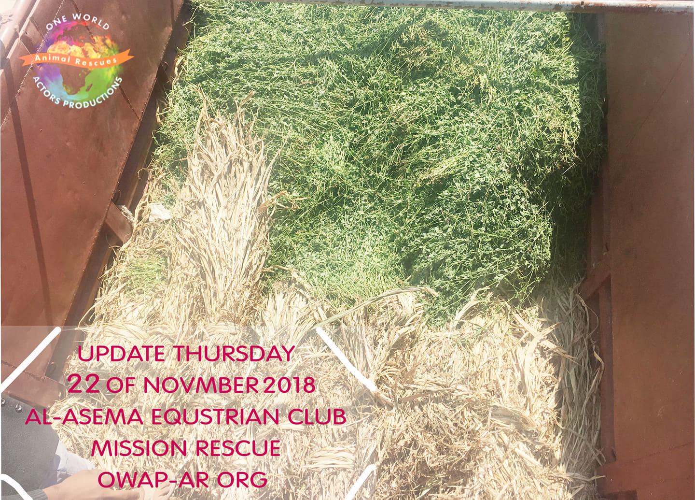 riding club delivery fodder by OWAP-AR Charity 22 nov 2018 nada coordinating sana'a yemen.jpg