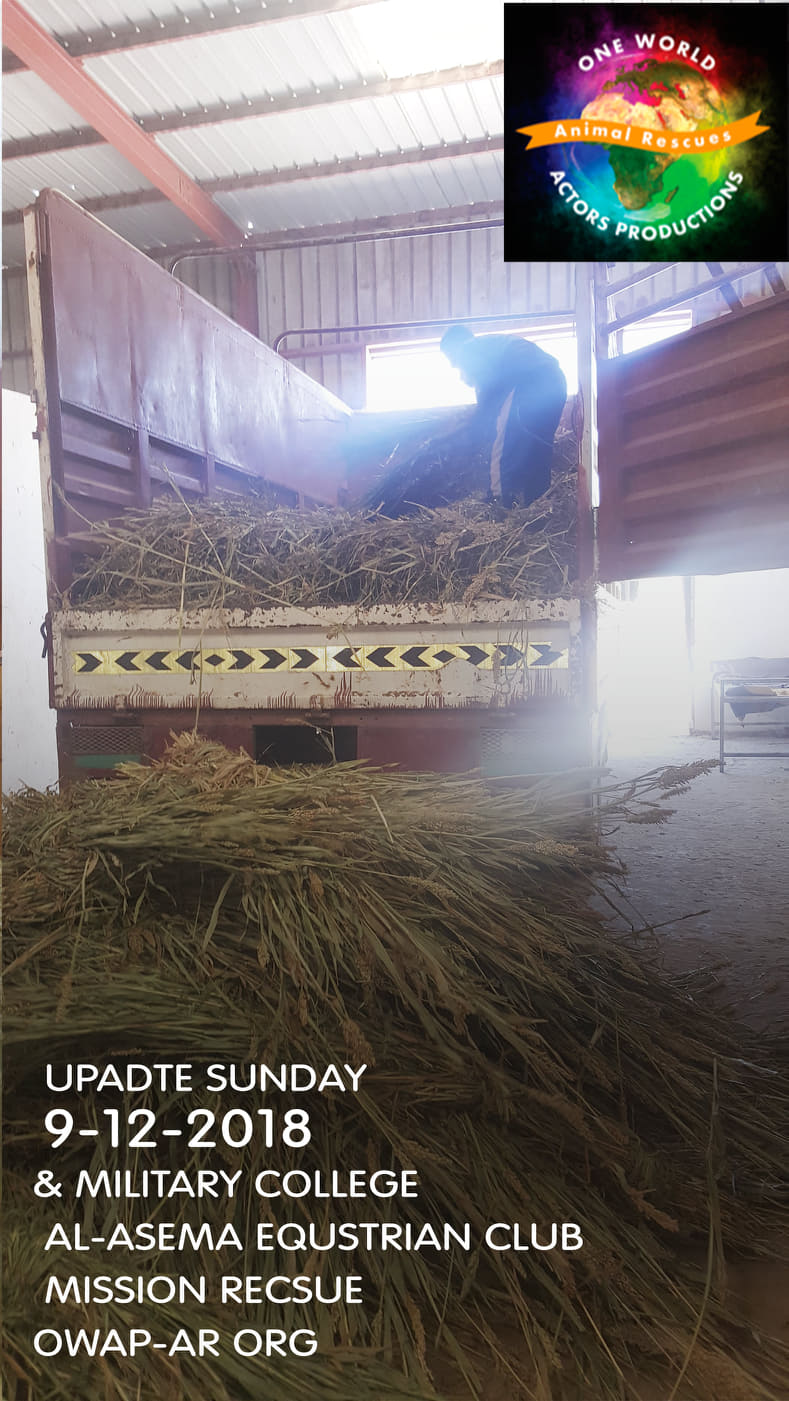 military ac. DEC 9 2018 by OWAP-AR relief aid sana'a  yemen horse rescue.jpg