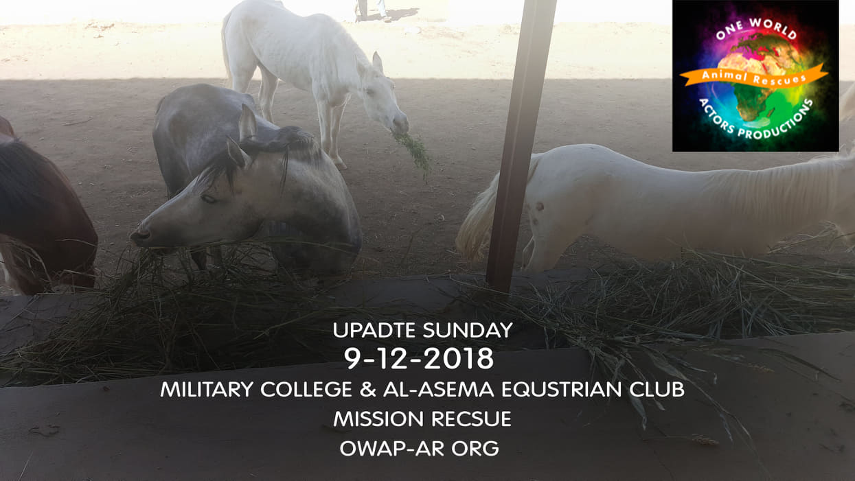 military DEC 9 2018 by OWAP-AR provider nada sana'a yemen rescue.jpg