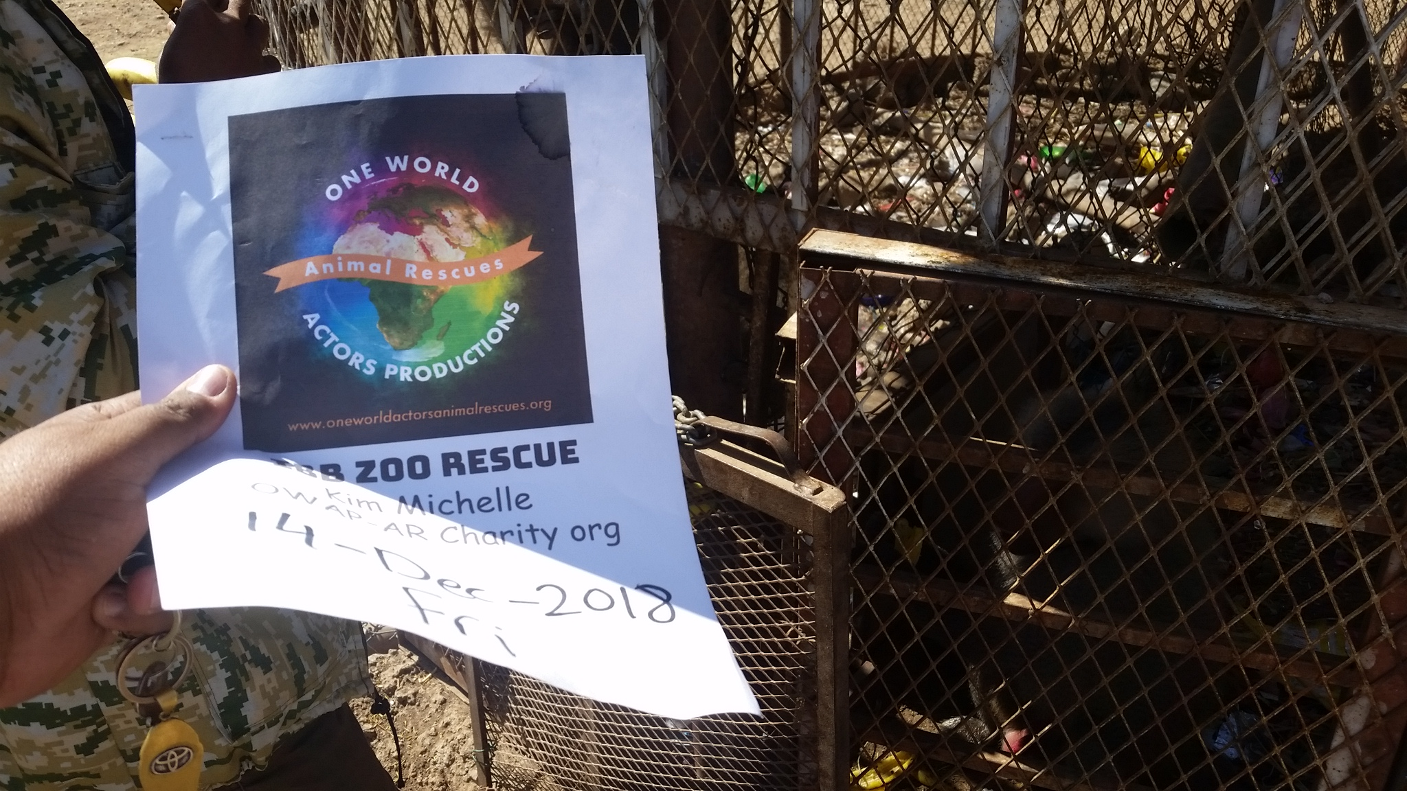 ibb zoo 14 DEC 2018 baboons feeding fruit by OWAP-AR with our sign Hisham cordinating yemen zoo rescue.jpg