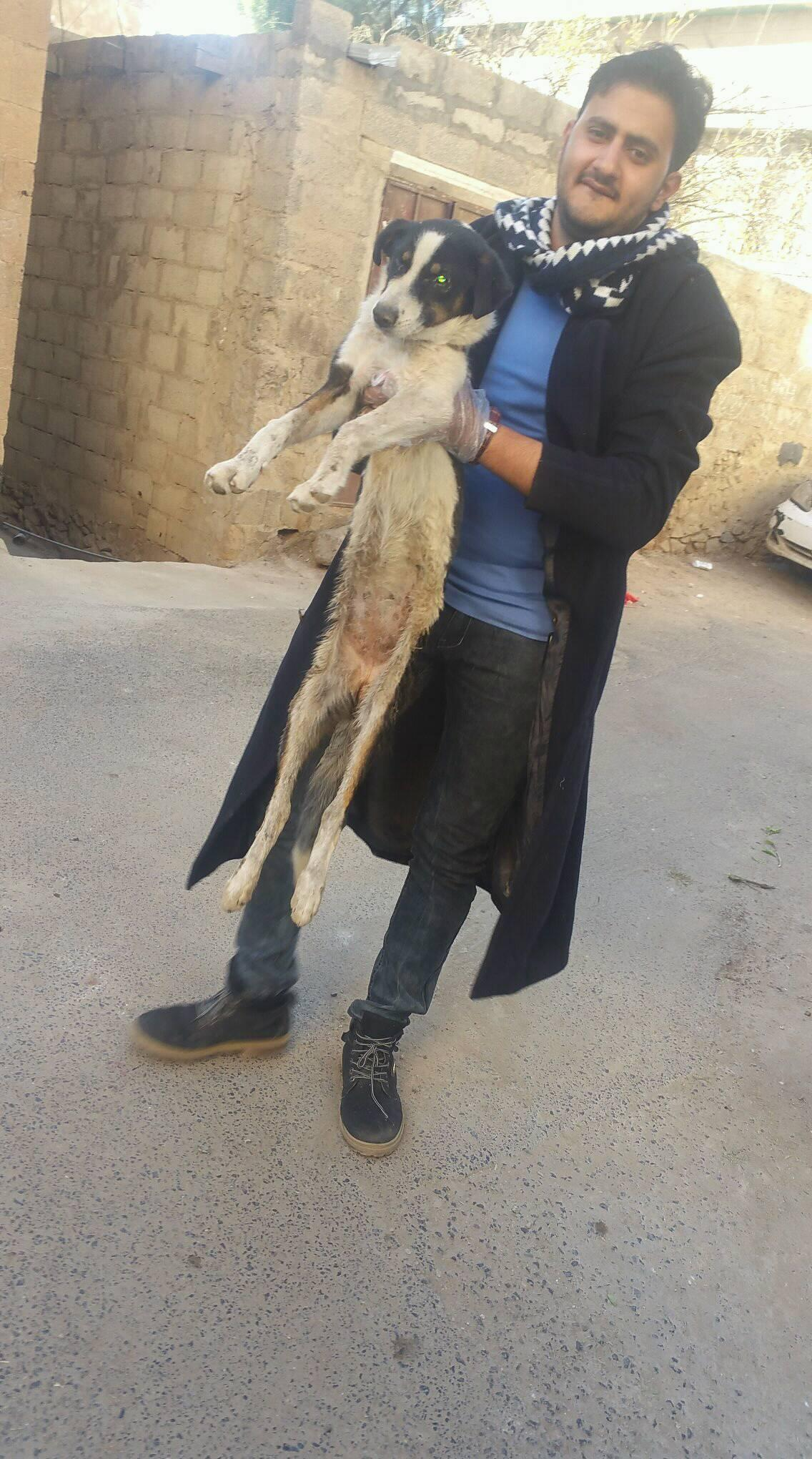 LUCY with Mohamed Qaten 26 DEC 2018 OWAP AR stray rescue mission sana'a yemen.jpg