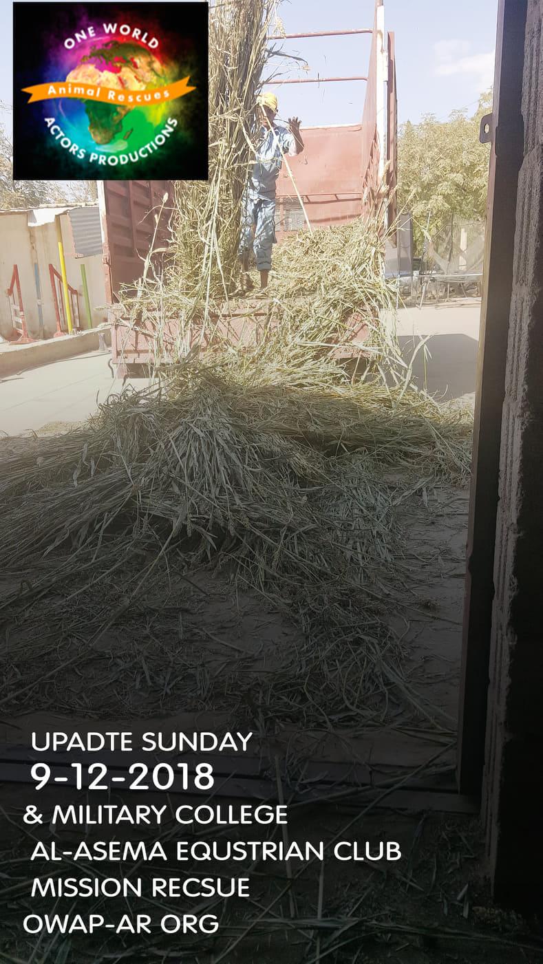 riding club sana'a yemen fodder delivery 9 DEC 2018 and military Ac..jpg