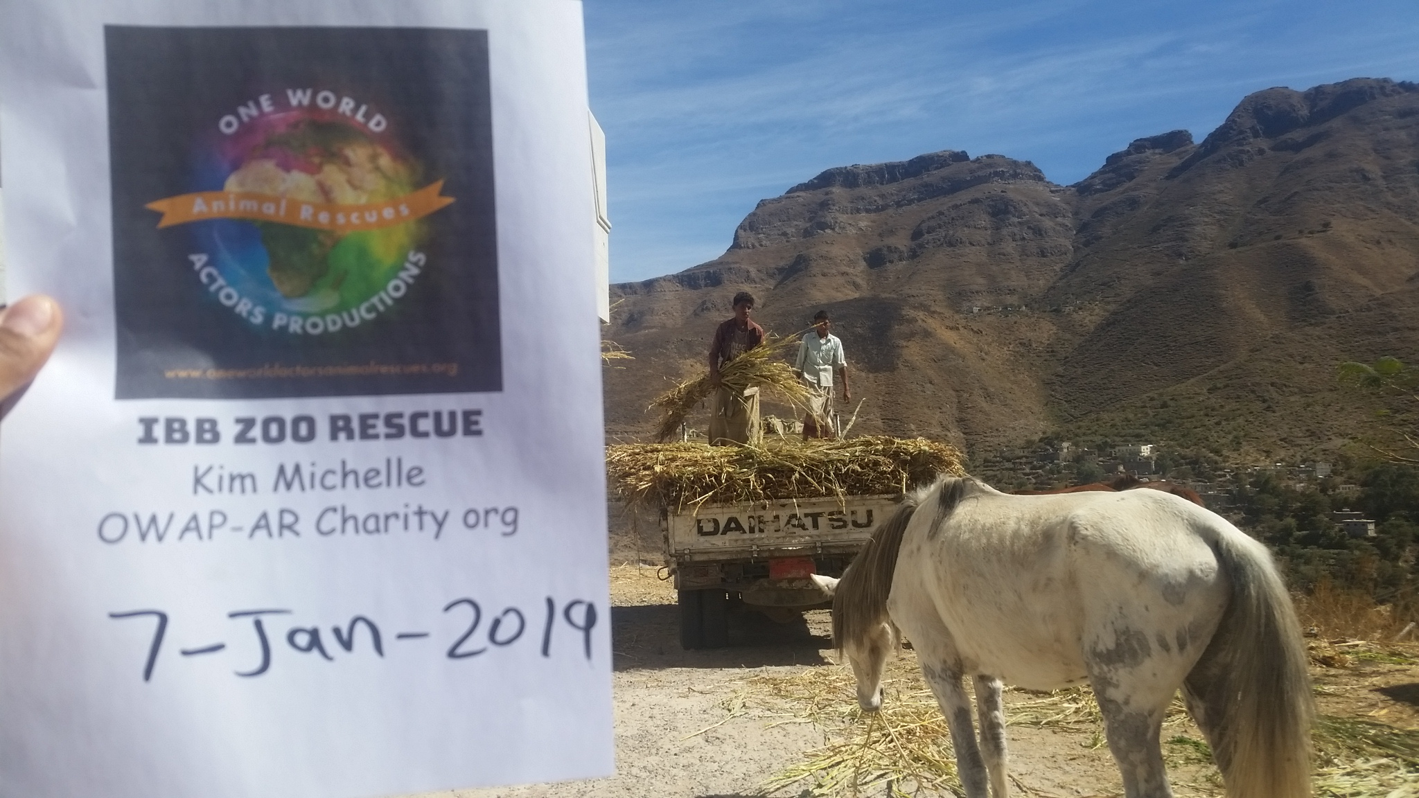 ibb zoo 7 JAN 2019 OWAP AR sign Horse with our corn stick delivery arriving unloading.jpg