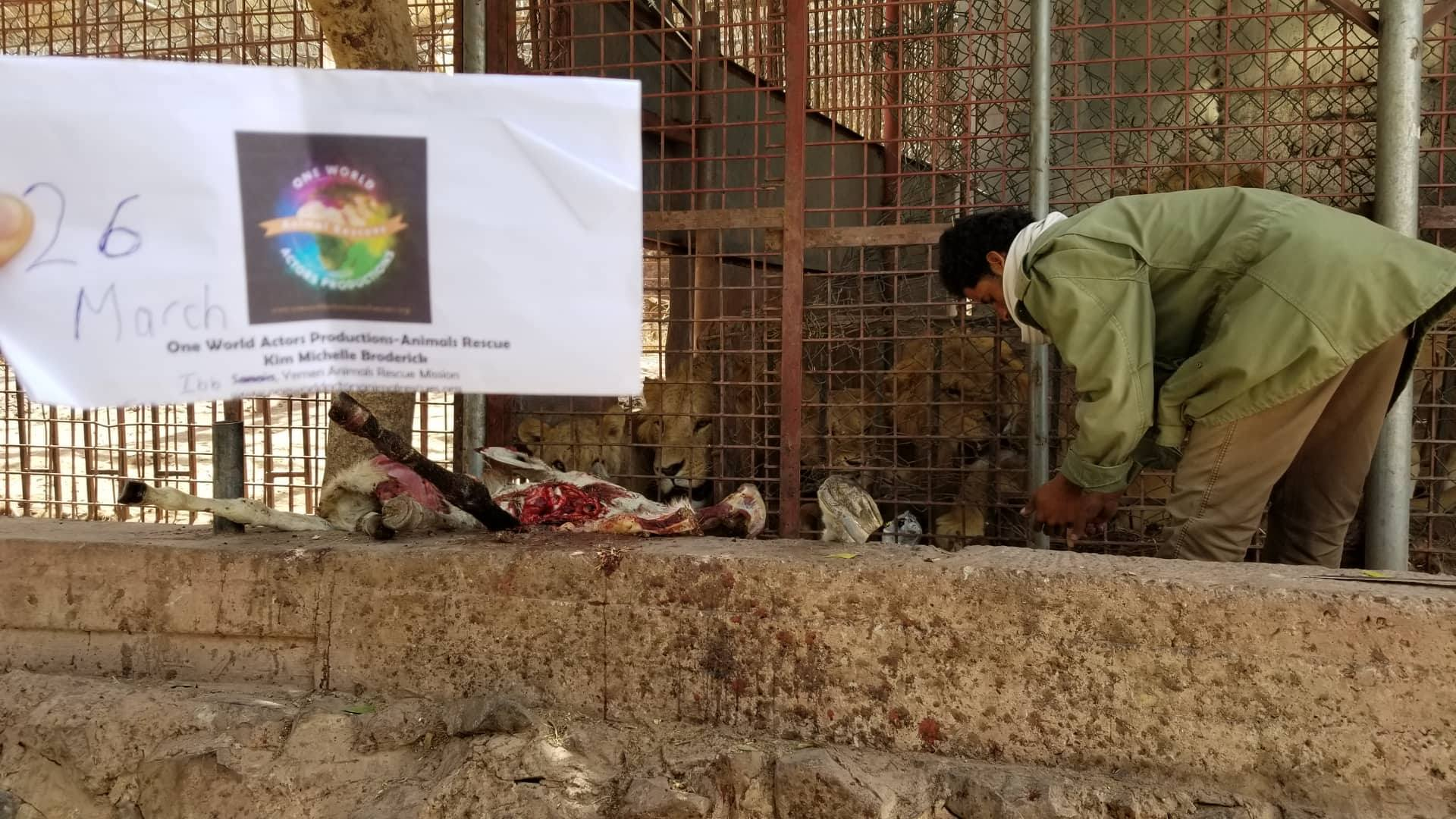 ibb zoo feed OWAPAR providing  26 march 2019 with abdulrazak yemen rescue Hisham visit delivery 11 donkeys.jpg