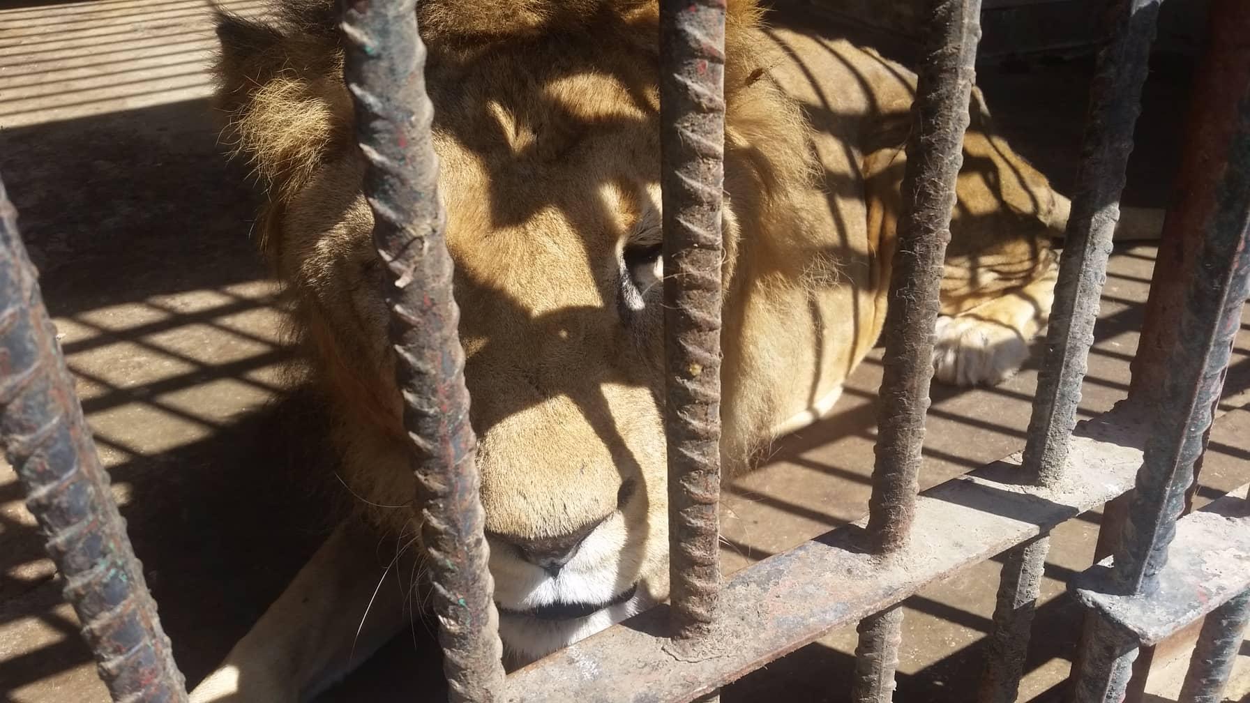 taiz zoo yemen 10 FEB 2019 OWAP-AR copywrite Hisham pics.jpg