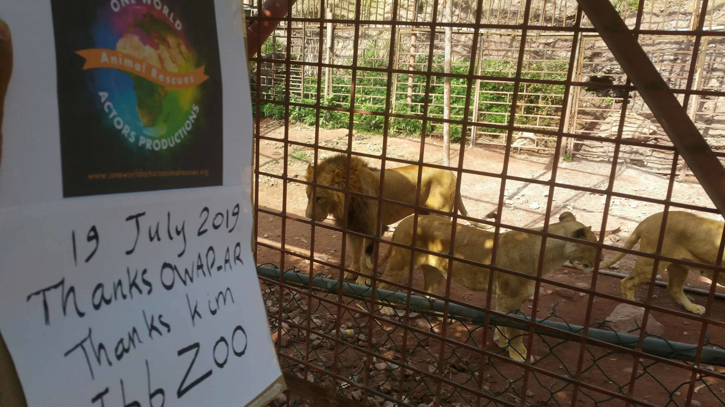 ibb zoo 19 July 2019 OWAP AR sign with 2 of the 4 adult females  yemen rescue.jpg