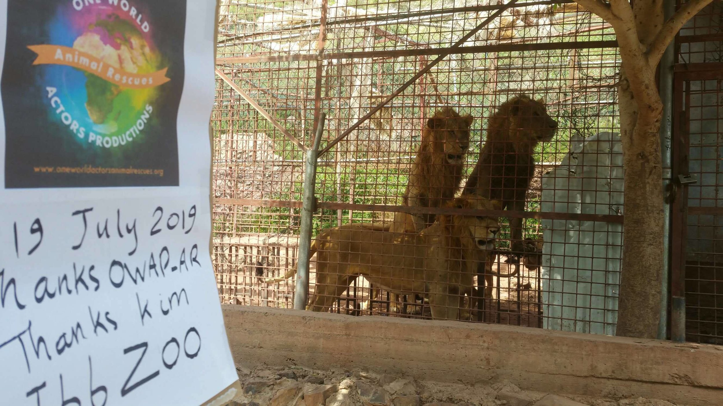ibb zoo 19 July 2019 OWAP AR sign 3 young males yemen rescue.jpg