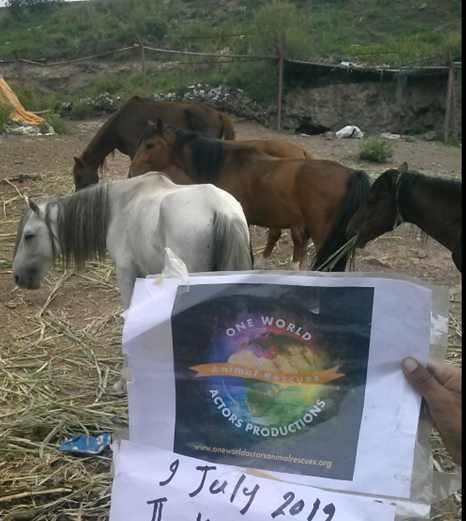 ibb zoo 9 July 2019 OWAP AR horses eating our fodder delivery.png