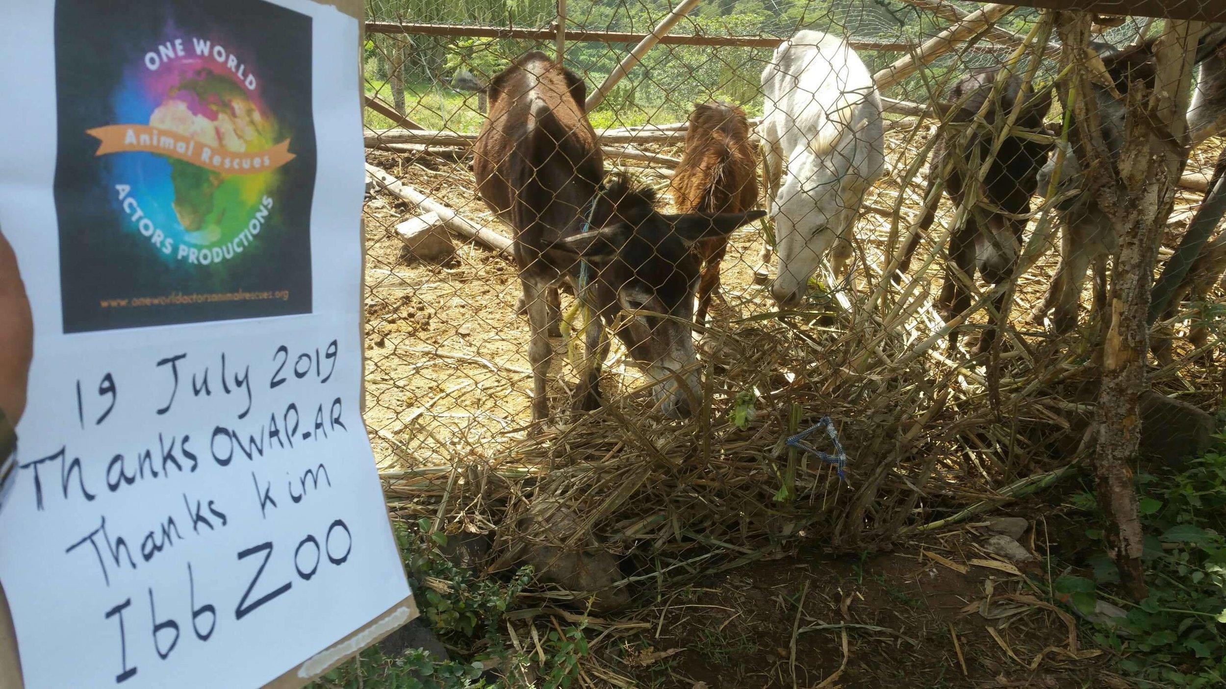 Ibb Zoo 19 July 2019 donkeys getting our fodder OWAP sign pic Dr Al Bukair.jpg
