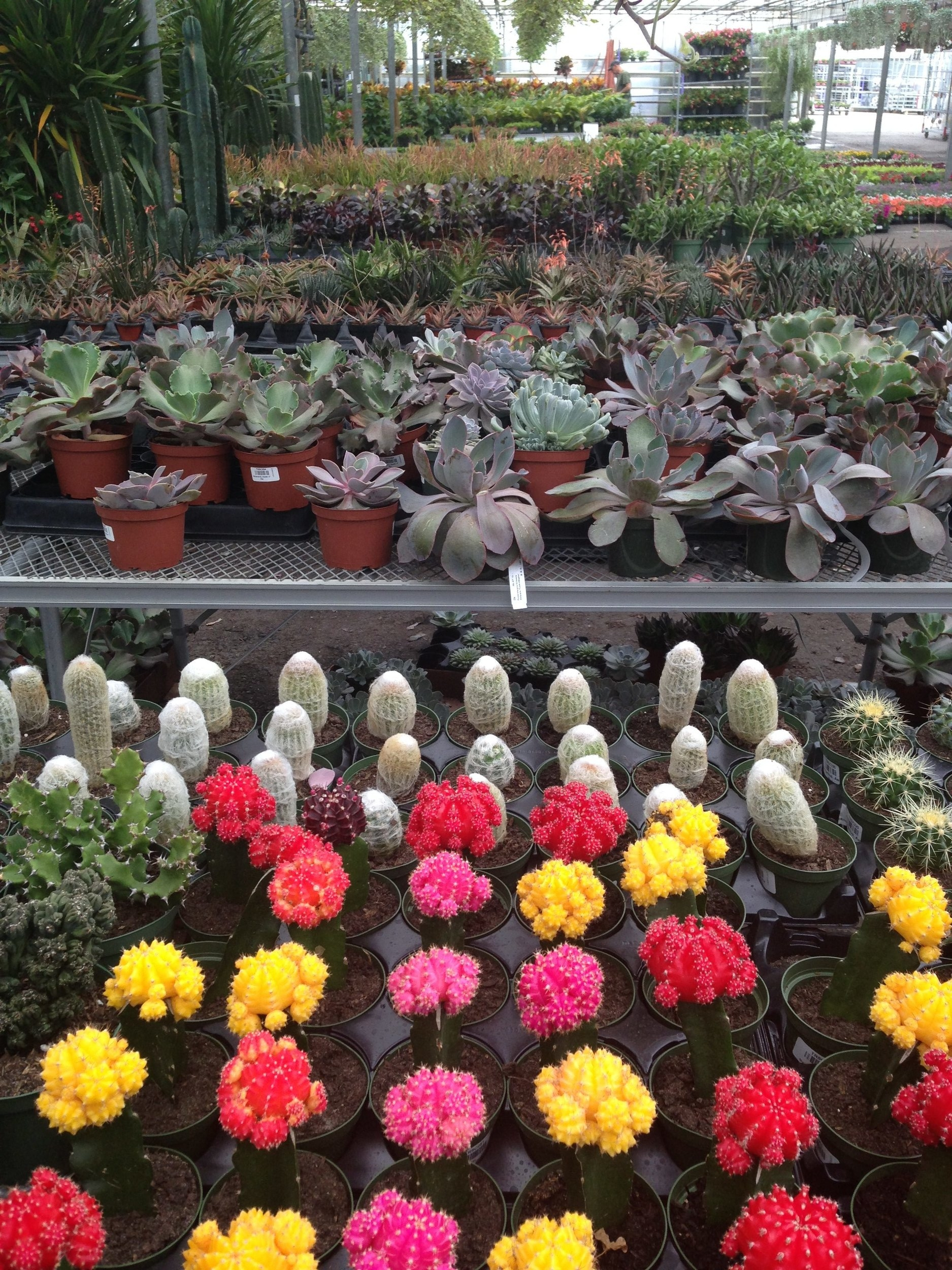 wholesale greenhouse with cacti and succulents