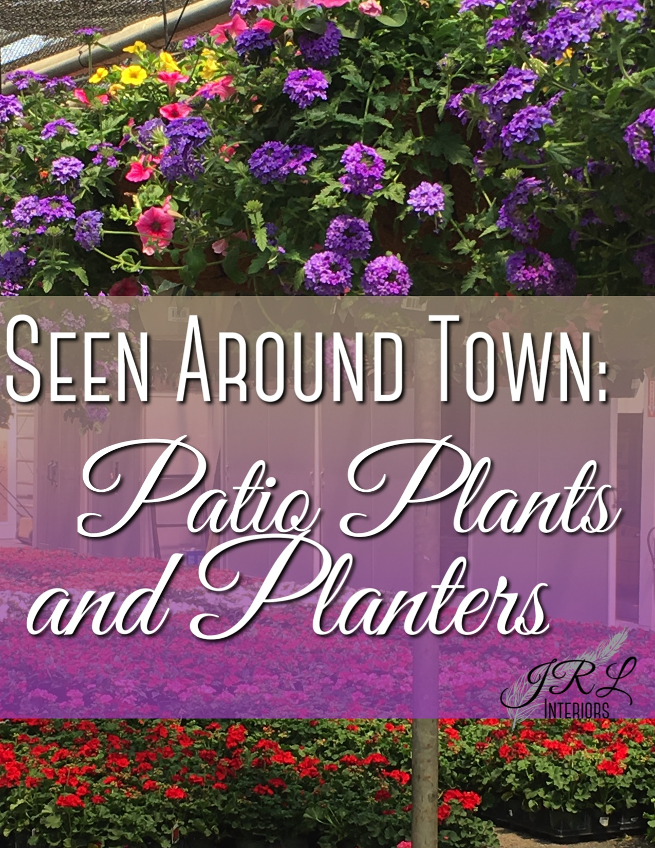 Seen Around Town Plants and Planters-1.jpg
