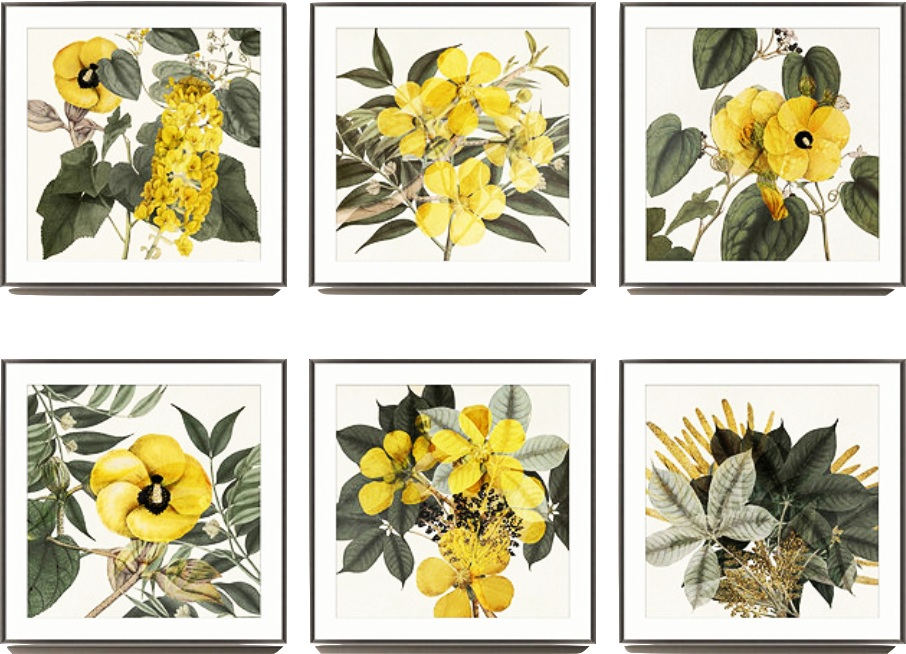 yellow botanicals