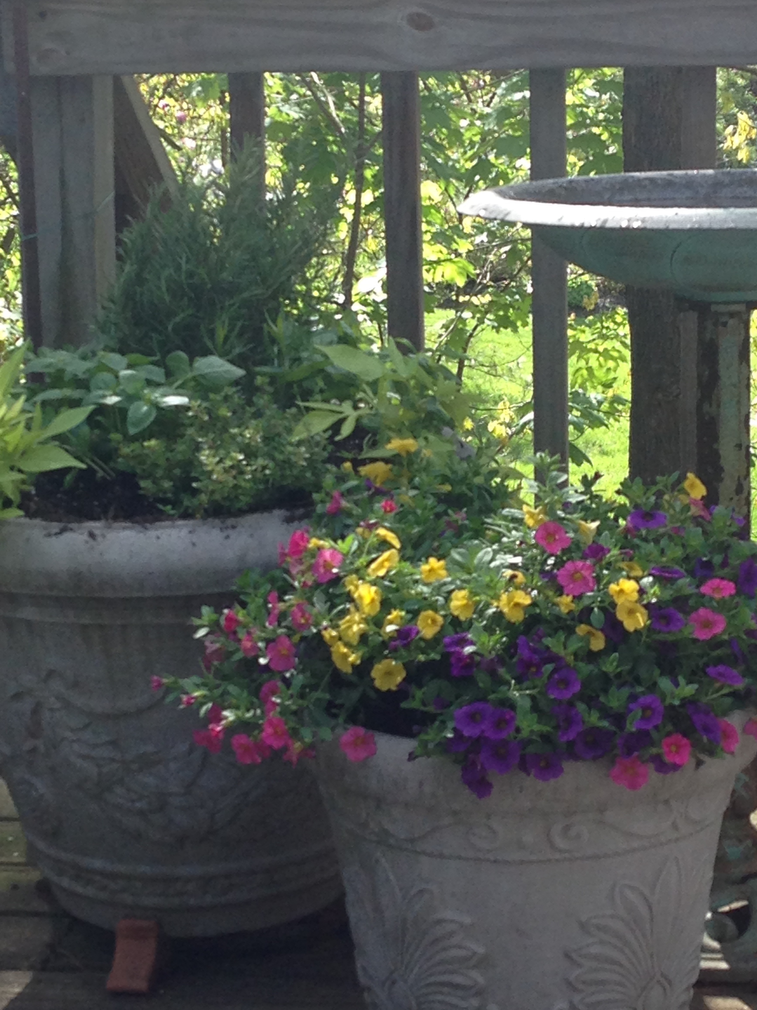 Pots of flowers and herbs surround a frequently visited birdbath on my back deck. The squirrels and chipmunks and a few birds use it for drinking, but the robins are the most fun to watch as they take rather vigorous, splashing baths nearly every summer afternoon!