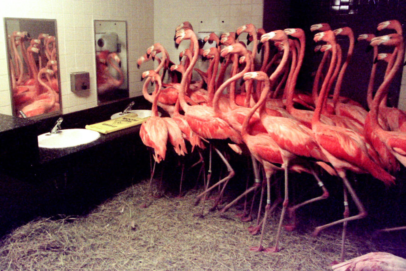 Well, this is certainly one way to add the color coral to a bathroom, though wallpaper is probably less problematic! (This was actually a hurricane plan executed by a Miami zoo in 1992, news story  HERE )